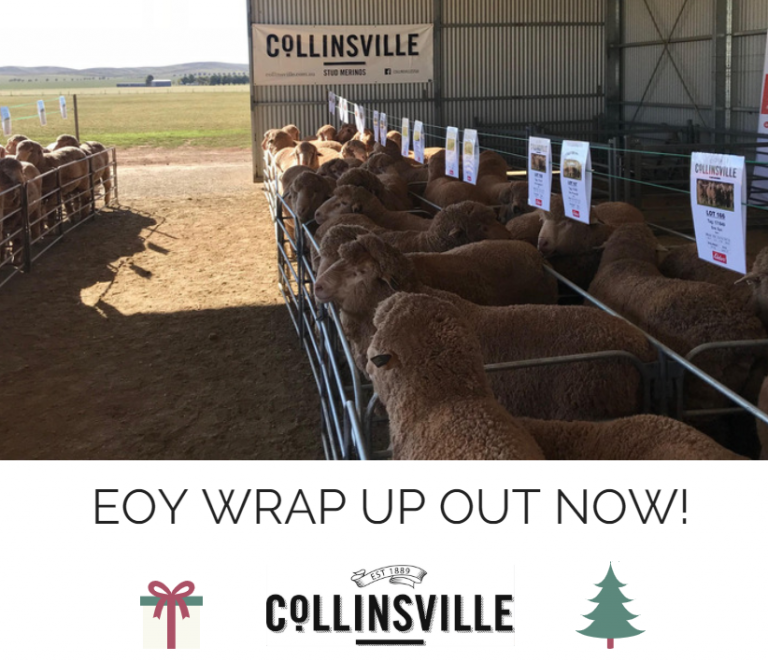 COLLINSVILLE END OF YEAR WRAP UP – OUT NOW