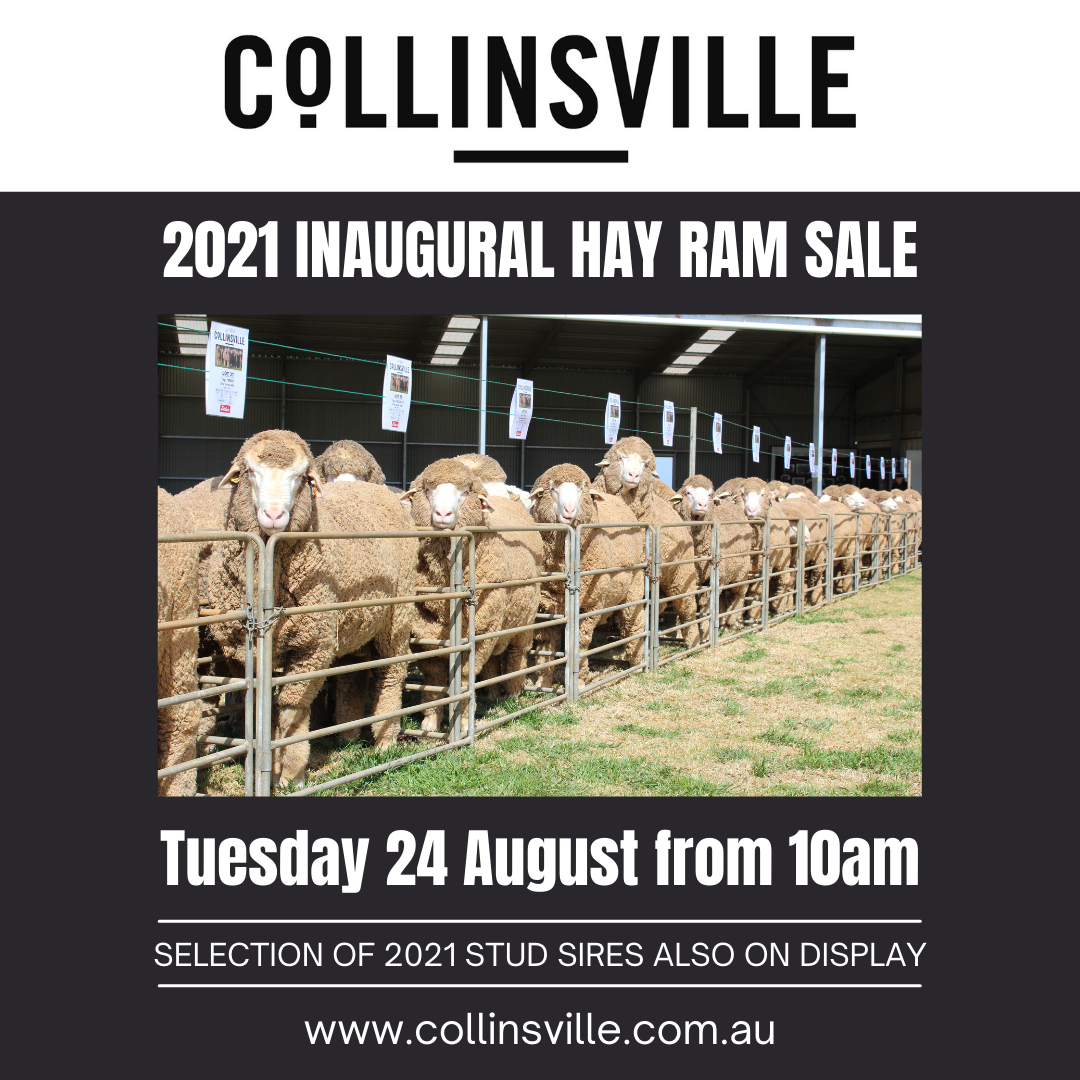 COLLINSVILLE HAY NSW DISPLAY AND INAGURAL RAM SALE 2021
