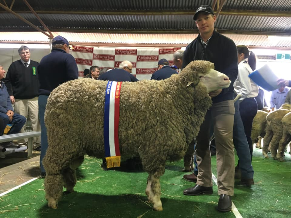 2019 Hay Sheep Show Results