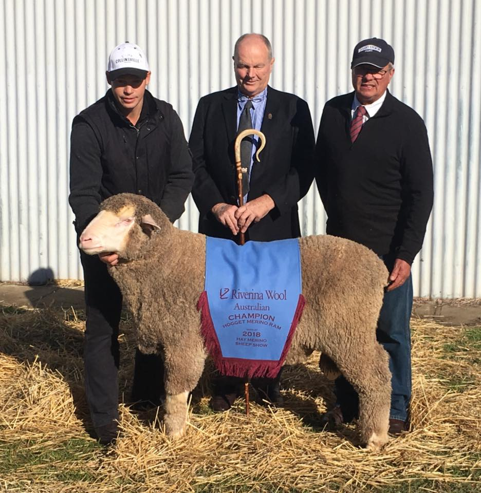 67th Hay Sheep Show 2018 Riverina Wool Australian Champion Hogget Merino Ram