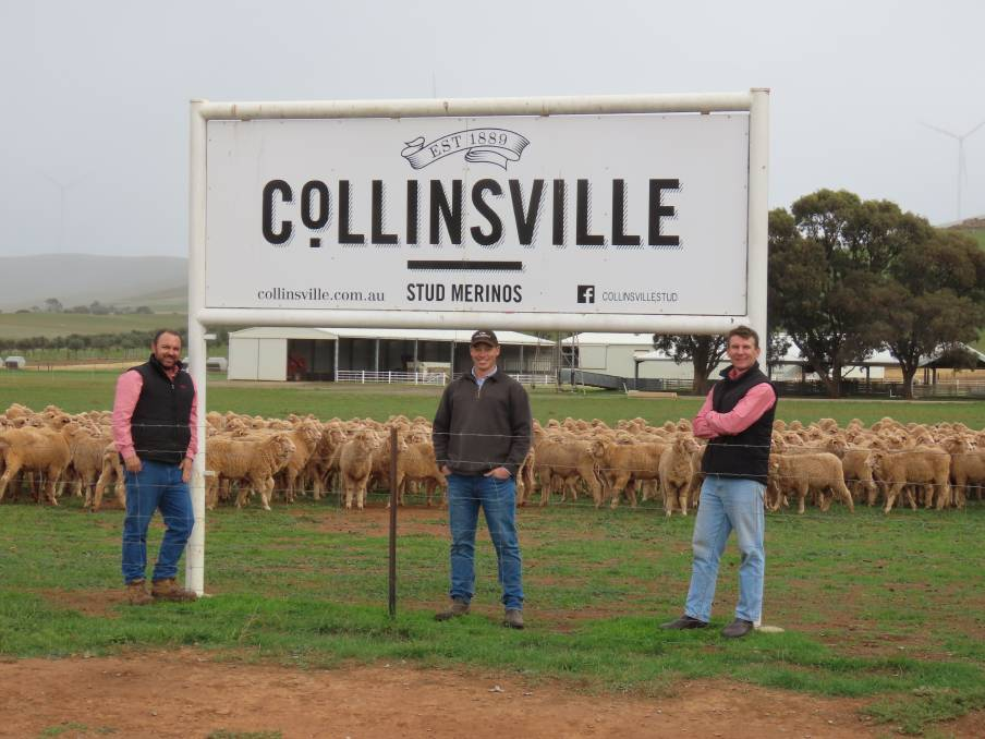 Merino Ewe Lambs sell for $330/head