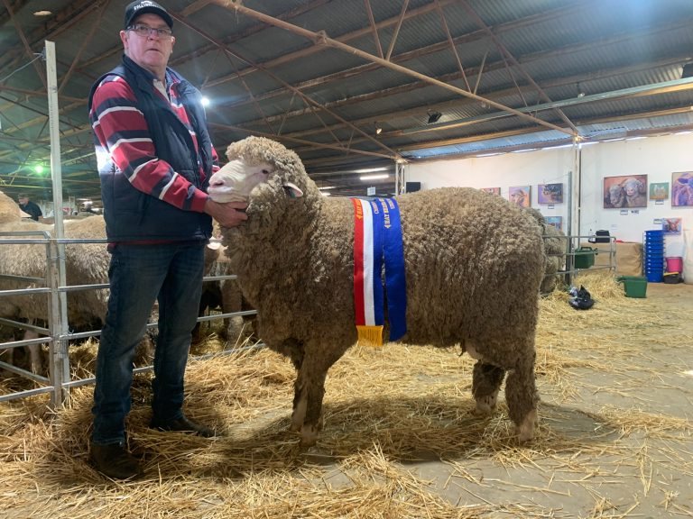 HAY MERINO SHEEP SHOW RESULTS