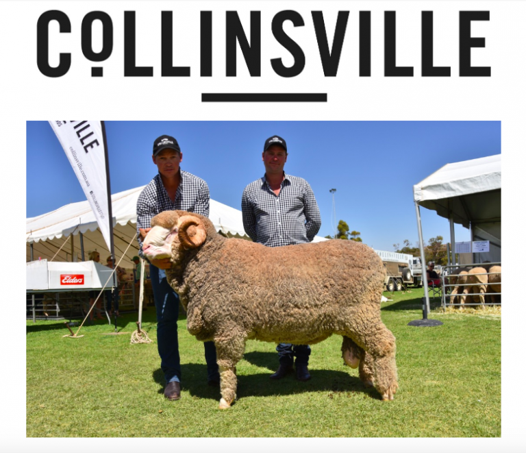 COLLINSVILLE AUTUMN UPDATE 2019