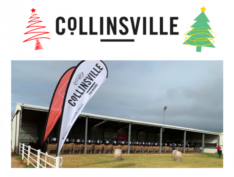 Collinsville End Of Year Wrap Up 2019