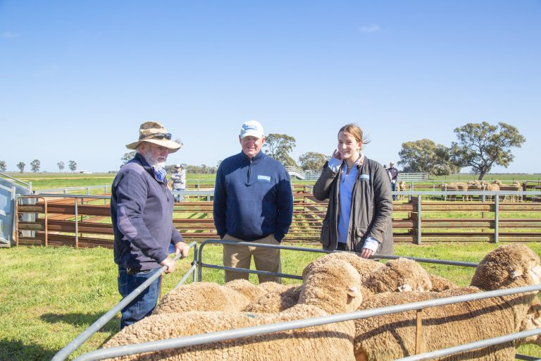COLLINSVILLE FLOCK RAMS SNAPPED UP IN NSW