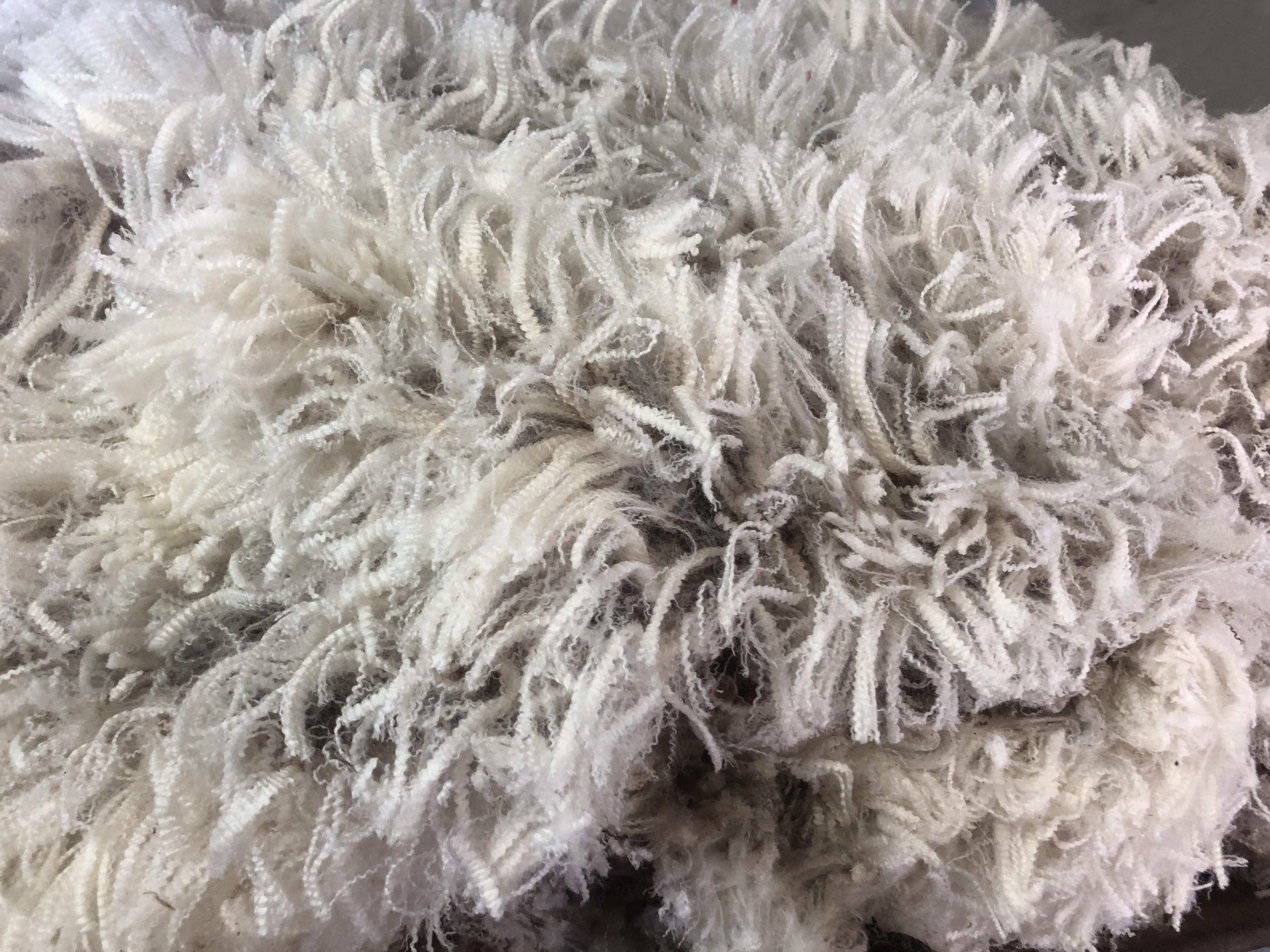 WOOL PRICES UP – SALES RESUME POST-CHRISTMAS